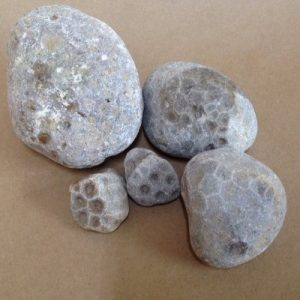 Unpolished Petoskey stones